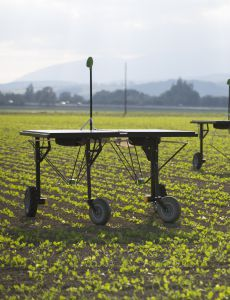 ecoRobotix : The robot is working in the field